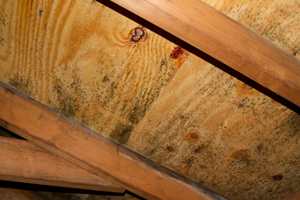 Mold growing on roof sheathing in Alabaster attic