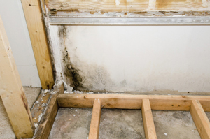 Mold on basement wall & floor