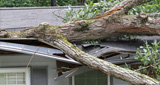 Wind Damage Repair in Alabama